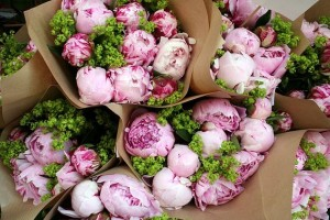 bunches of peony